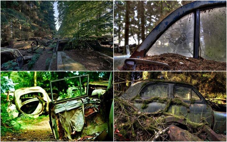 Ormanda Saklı Bir Araba Mezarlığı